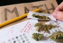 Educación en el Consumo de Marihuana es la Solución