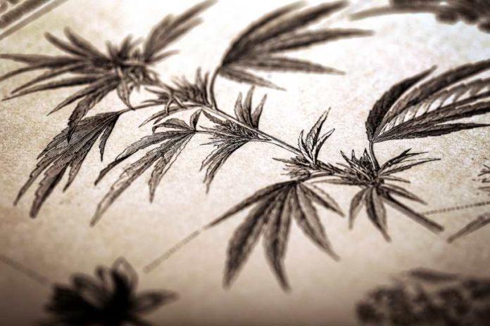 Historia entre la Marihuana y la Depresión