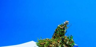 Marihuana para Noches sin Dormir - Marihuana Insomnio