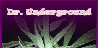 Semilla de Marihuana Auto Melon Gum del banco Dr. Underground