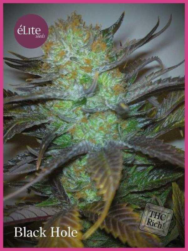 La Semilla de Marihuana Black Hole del banco Elite Seeds