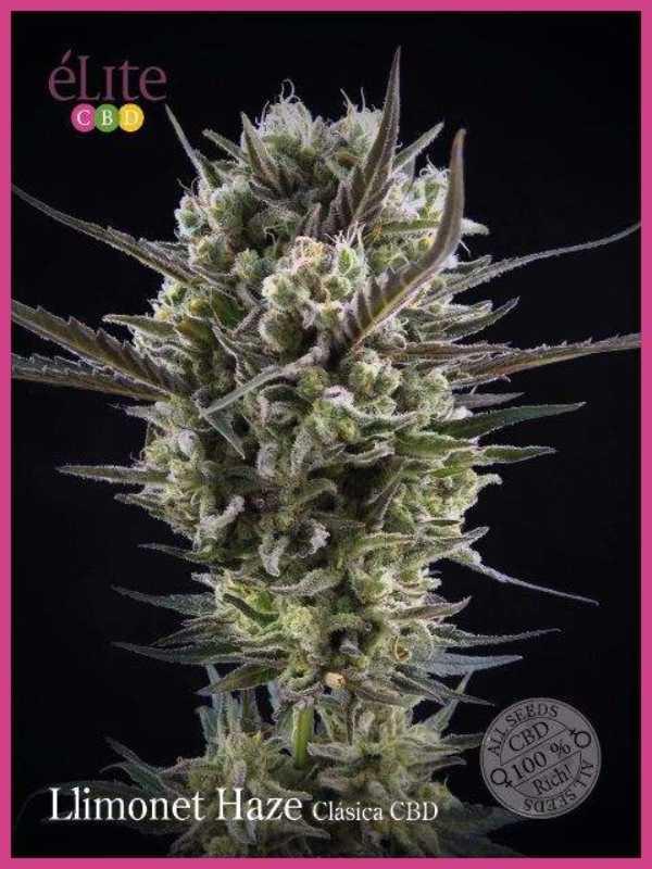 Semilla de Marihuana Llimonet Haze Clásica CBD del banco Elite Seeds