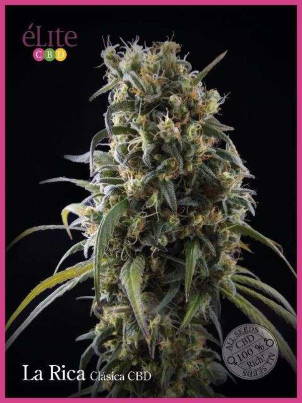 Semilla de Marihuana Rica Clásica CBD del banco Elite Seeds