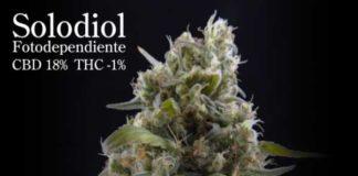 Semilla de Marihuana Solodiol CBD del banco Elite Seeds
