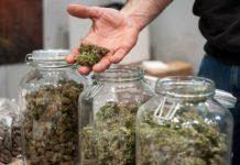 Adolescentes deben dejar la Marihuana Mientras se Forman sus Cerebros