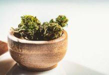 Pasos para Controlar la Calidad de la Marihuana