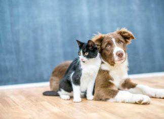 Marihuana Medicinal ayuda a Perros y Gatos