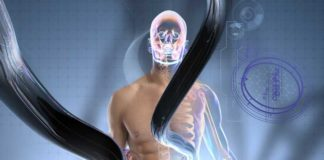 Sistema Endocannabinoide y los Procesos Fisiológicos