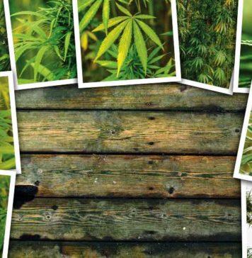 Diferentes Tipos de Cepas de Marihuana