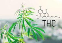 Beneficios que Ofrece el THC para la Salud