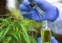 Beneficios Medicinales del uso del Aceite Rico en CBD