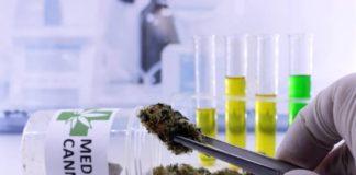 La Marihuana Medicinal puede ser Efectiva para el Dolor de Espalda Crónico