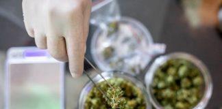 La Marihuana Medicinal no resulta igual para todos