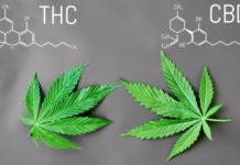 Razones para poder Elegir CBD en vez del THC