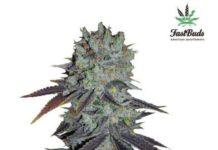 Semilla de Marihuana Fastberry del banco Fastbuds
