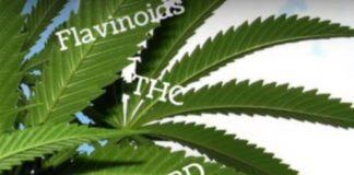 Cannabinoides y los Efectos en el Cuerpo Humano