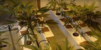 Cultivar Marihuana en Tierra o en Agua