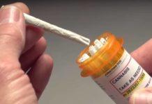"""Cultivando Marihuana Medicinal: Cepas """"Medicinal"""" vs. no Medicinales"""