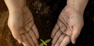 Nutrientes Marihuana - Ayuda con los Nutrientes en la Marihuana