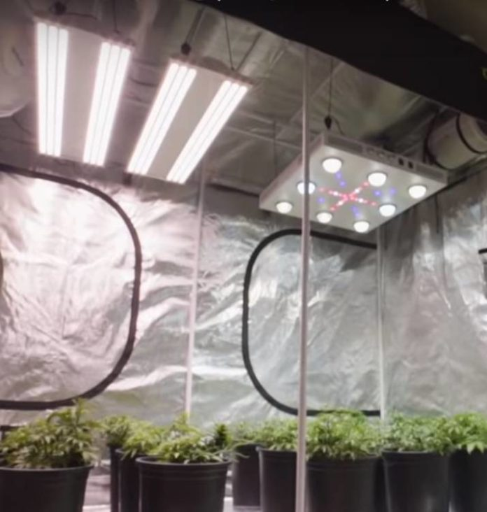 Iluminación Lateral en el Cultivo de Interior de Marihuana