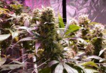 Las Mejores Formas de Consumir Marihuana sin Fumar