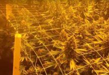 Consejos Importantes para los Cultivadores de Marihuana de Interior