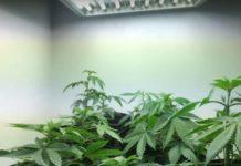 El Mejor Lugar para Cultivar Marihuana en la Casa