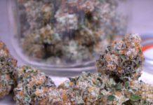 Suplementos para Ayudar a la Marihuana con el Estrés por Calor