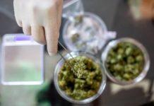 Cual es la Variedad de Marihuana ideal para Nosotros