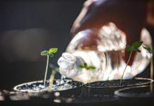Cómo Preparar el agua de riego para las plantas de marihuana