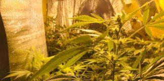 6 Elementos que no Pueden Faltar en el Cultivo de Marihuana