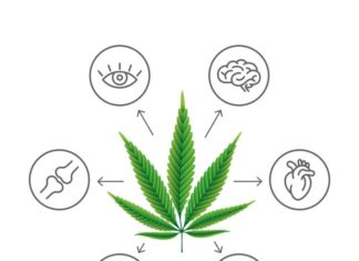 Cuánto Tiempo Puede estar el THC en el Cuerpo