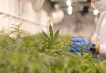 Empezamos con un Cultivo de Marihuana de Interior