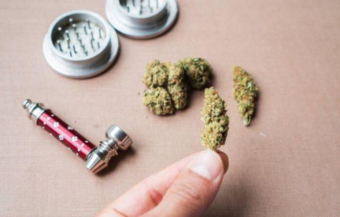 Terpenos en el Aceite Esencial de Marihuana