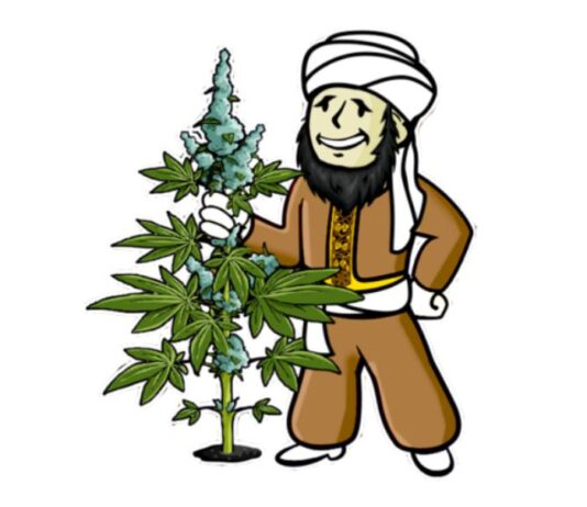 Divine Seeds - Banco de Semillas de Marihuana Divine Seeds