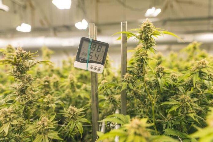 Accesorios para Maximizar el Rendimiento de su Marihuana