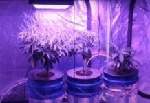 Guía Básica para el Cultivo Aeropónico