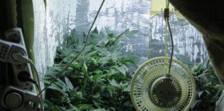 Mitos sobre el Enfriamiento de su Cuarto de Cultivo de Marihuana