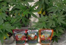 Nutrientes que se Necesitan para que las Plantas Crezcan