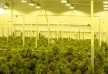 Productos Farmacéuticos donde está la Marihuana