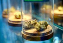 ¿Cómo Almacenar los Cogollos de Marihuana Correctamente?