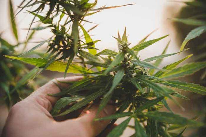 Armarios de Cultivo para Autoflorecientes